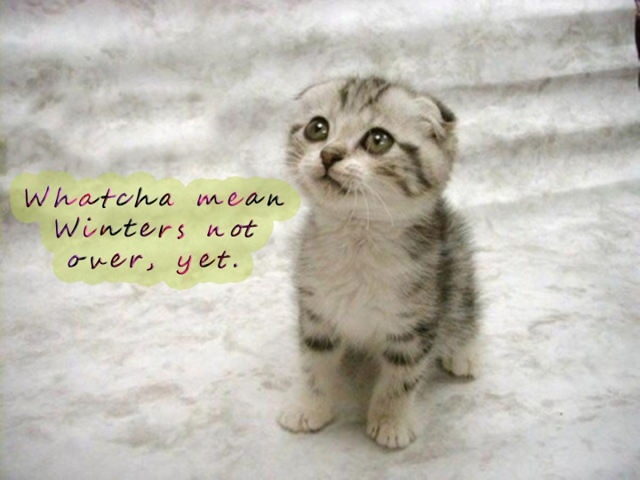 Cute kitten asking about winter - 001 copy